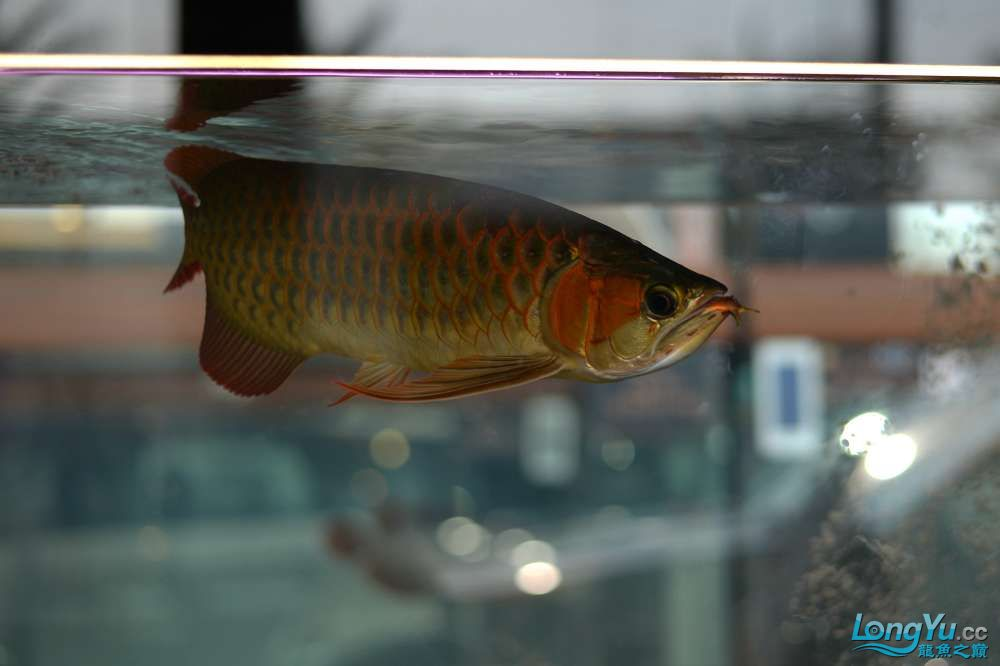 中国深圳国际水族文化节 西安龙鱼论坛 西安博特第35张