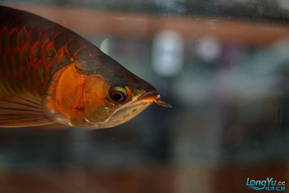 中国深圳国际水族文化节 西安龙鱼论坛 西安博特第36张