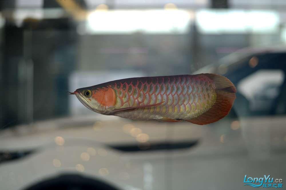 中国深圳国际水族文化节 西安龙鱼论坛 西安博特第37张