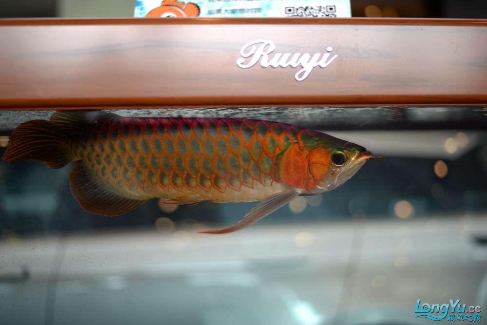 中国深圳国际水族文化节 西安龙鱼论坛 西安博特第41张