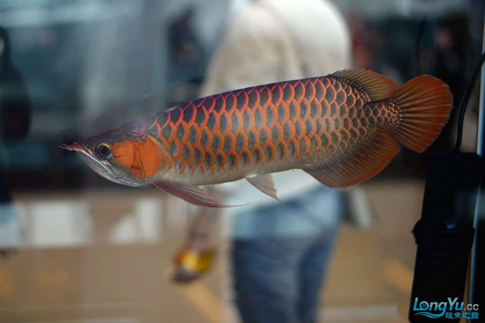 中国深圳国际水族文化节 西安龙鱼论坛 西安博特第42张