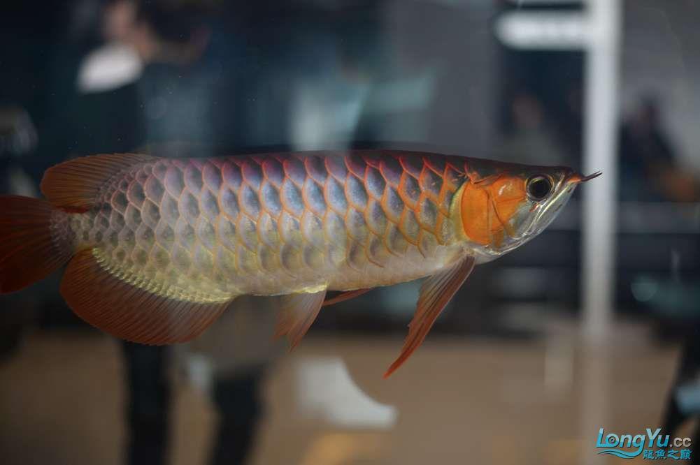 中国深圳国际水族文化节 西安龙鱼论坛 西安博特第43张