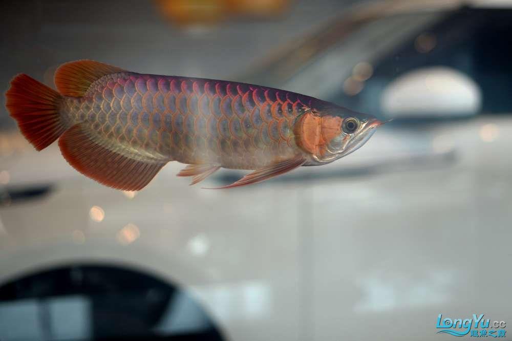 中国深圳国际水族文化节 西安龙鱼论坛 西安博特第44张