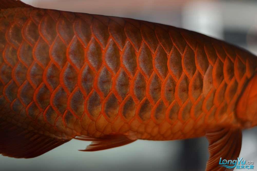 中国深圳国际水族文化节 西安龙鱼论坛 西安博特第46张