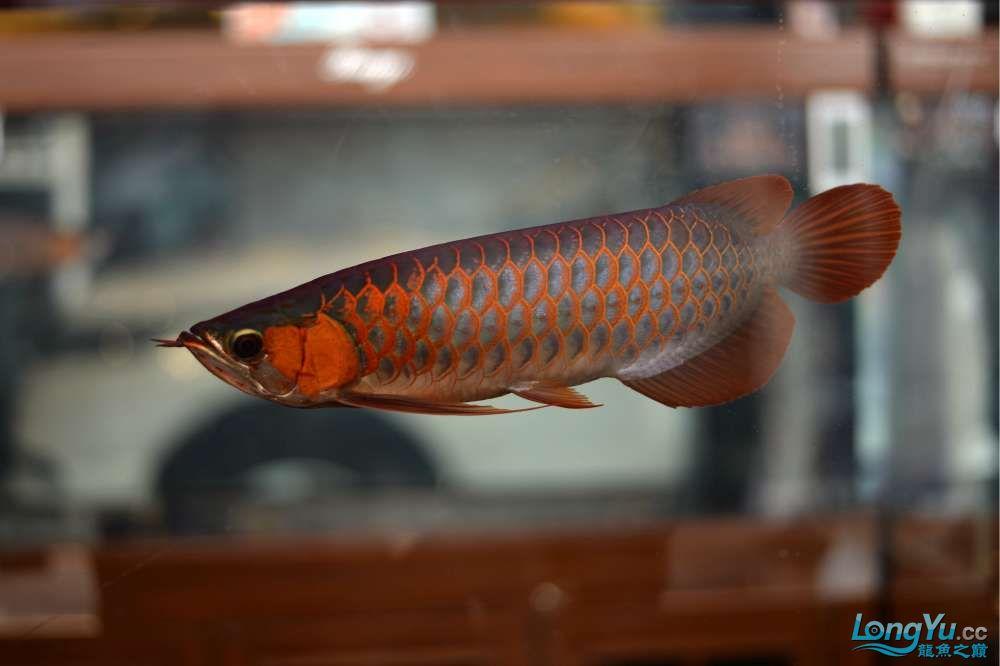 中国深圳国际水族文化节 西安龙鱼论坛 西安博特第47张