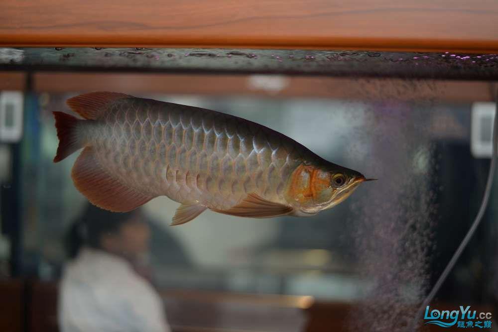 中国深圳国际水族文化节 西安龙鱼论坛 西安博特第49张