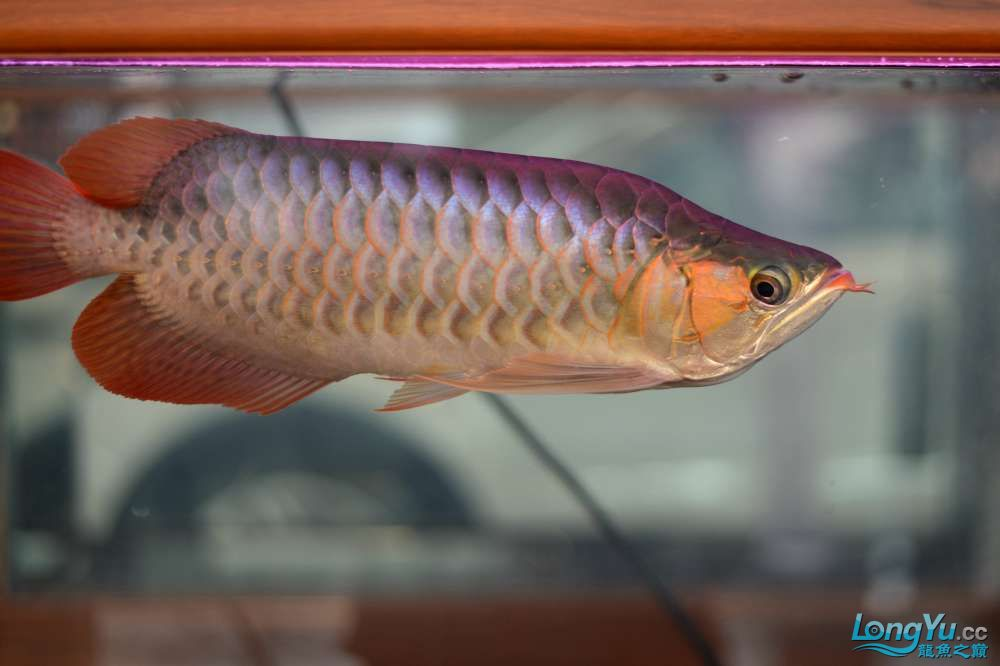中国深圳国际水族文化节 西安龙鱼论坛 西安博特第50张