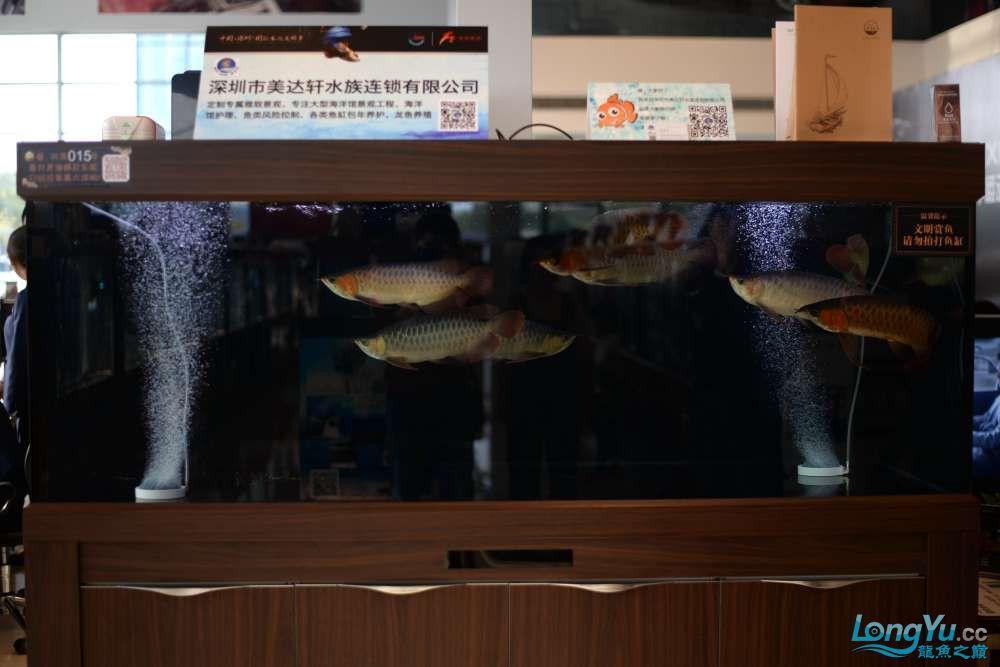 中国深圳国际水族文化节 西安龙鱼论坛 西安博特第51张