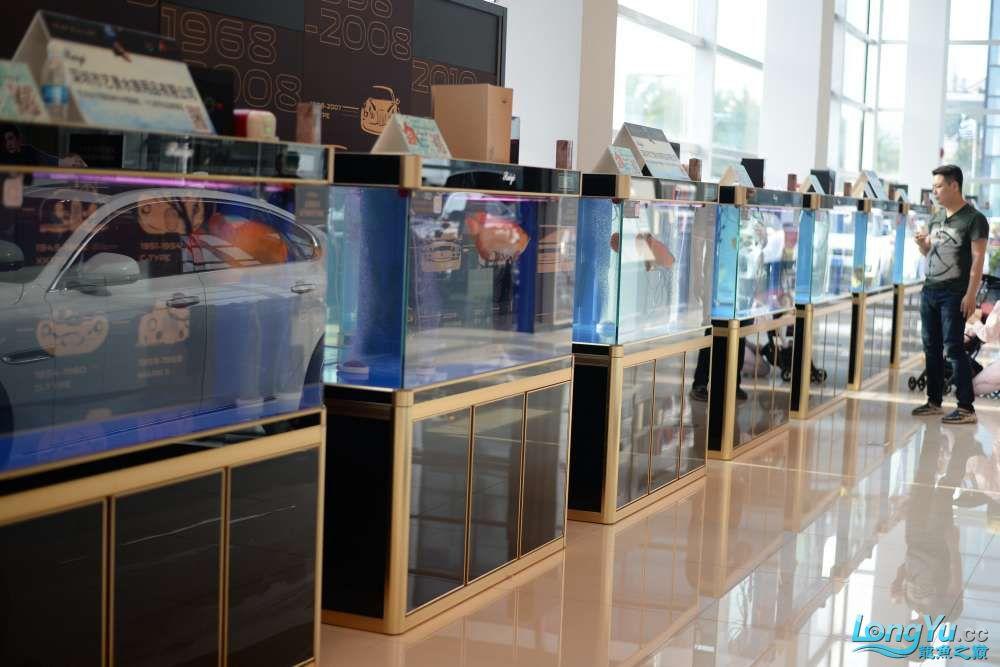 中国深圳国际水族文化节 西安龙鱼论坛 西安博特第52张