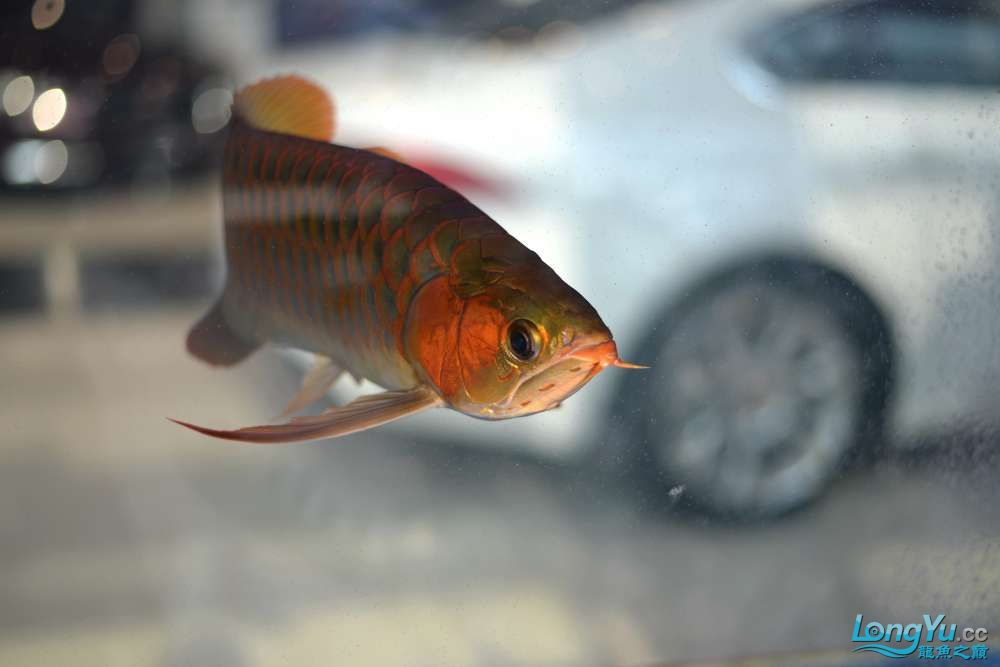 中国深圳国际水族文化节 西安龙鱼论坛 西安博特第53张