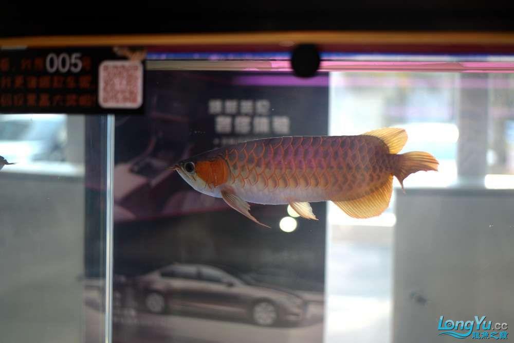 中国深圳国际水族文化节 西安龙鱼论坛 西安博特第54张