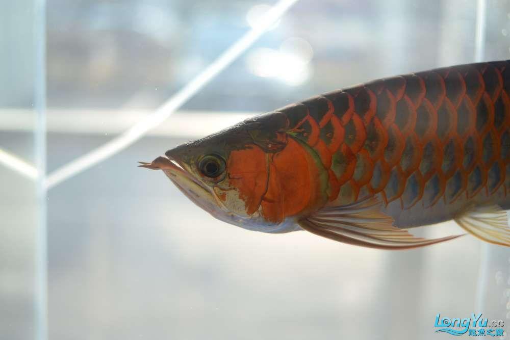 中国深圳国际水族文化节 西安龙鱼论坛 西安博特第57张