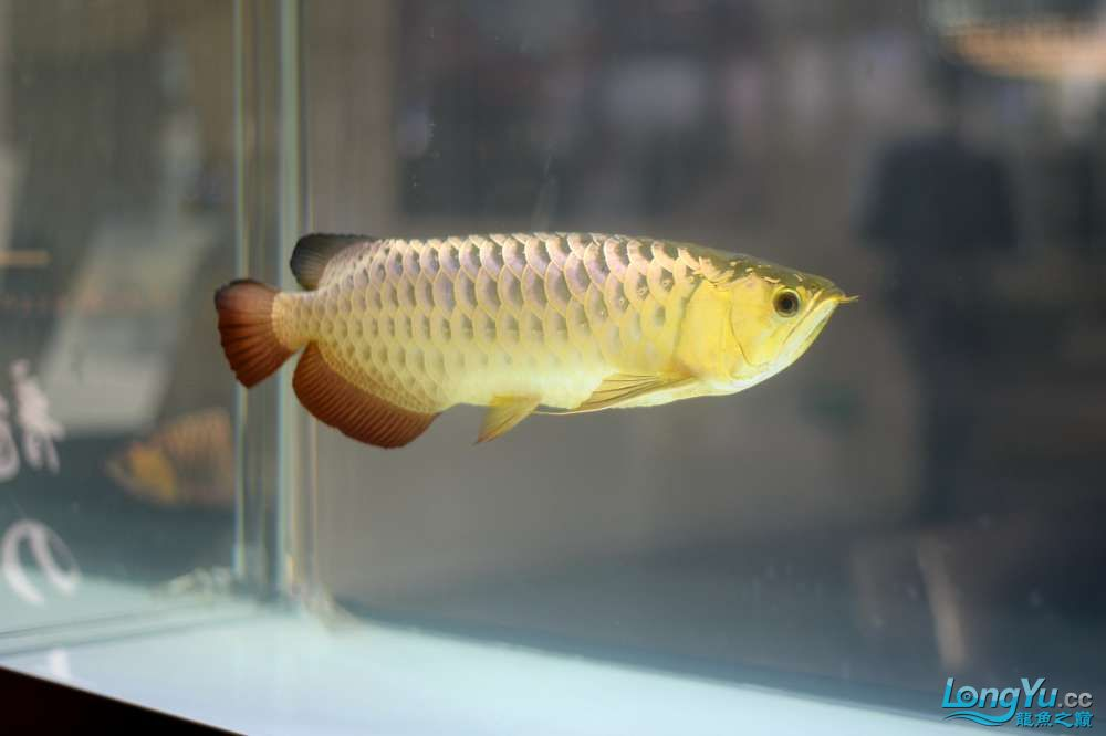 中国深圳国际水族文化节 西安龙鱼论坛 西安博特第59张