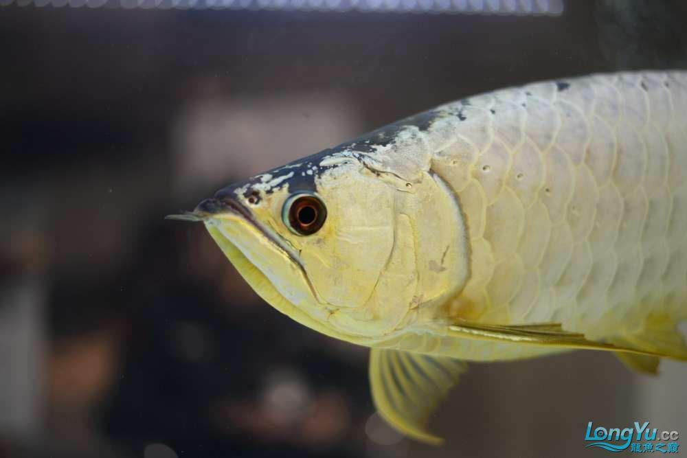 中国深圳国际水族文化节 西安龙鱼论坛 西安博特第62张