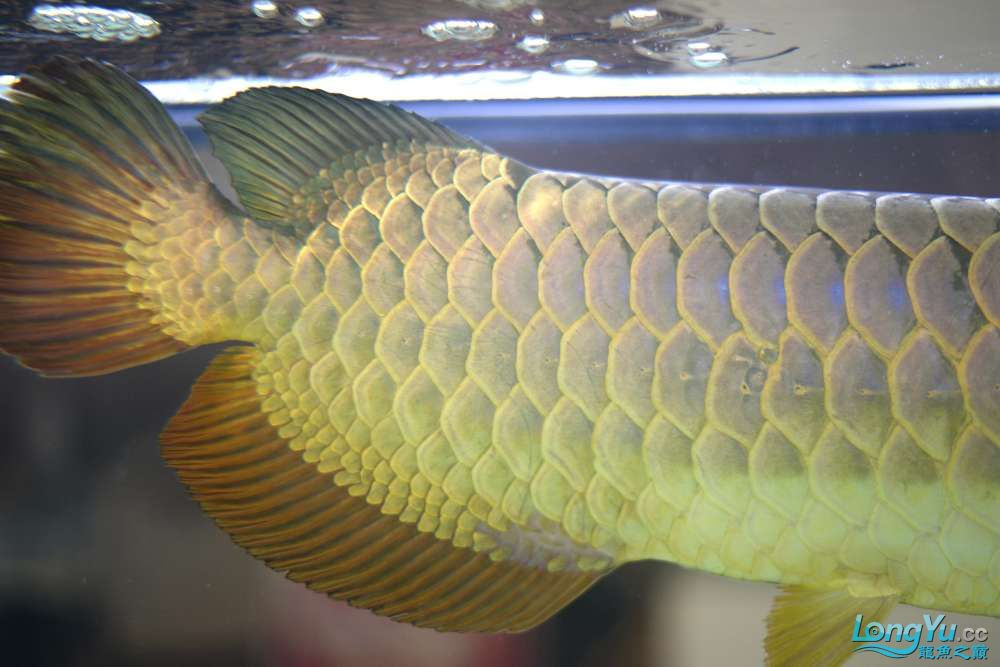 中国深圳国际水族文化节 西安龙鱼论坛 西安博特第64张
