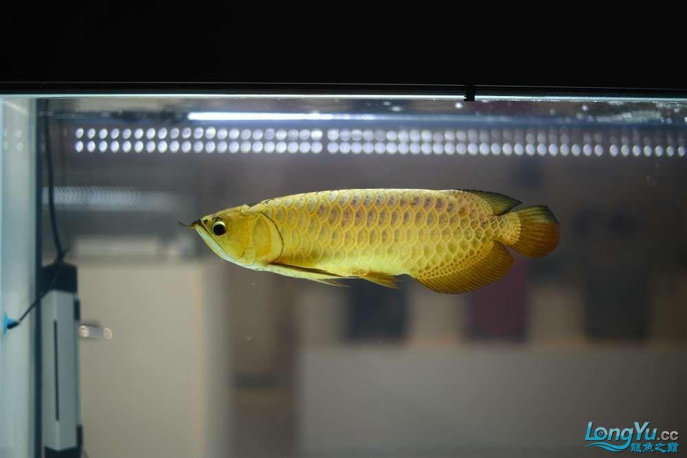中国深圳国际水族文化节 西安龙鱼论坛 西安博特第65张