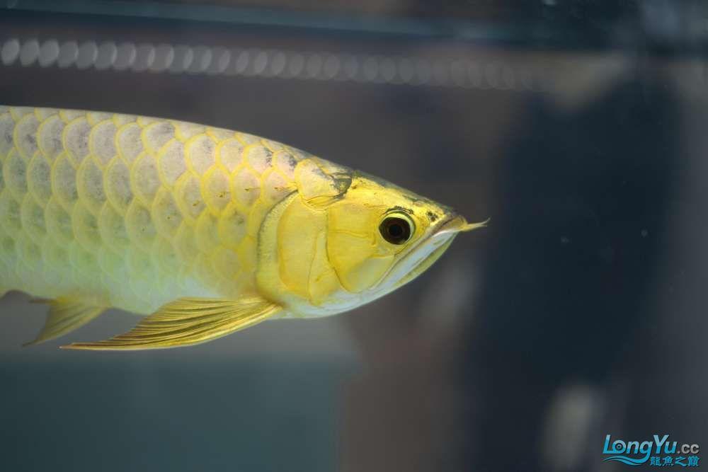 中国深圳国际水族文化节 西安龙鱼论坛 西安博特第68张