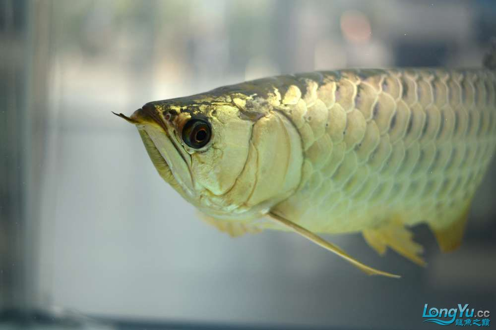 中国深圳国际水族文化节 西安龙鱼论坛 西安博特第73张