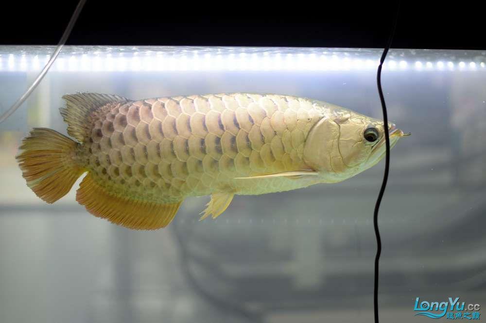 中国深圳国际水族文化节 西安龙鱼论坛 西安博特第74张