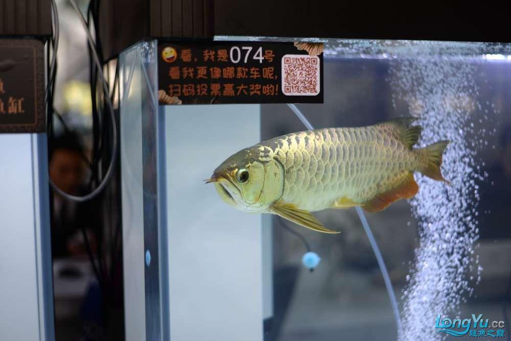 中国深圳国际水族文化节 西安龙鱼论坛 西安博特第76张