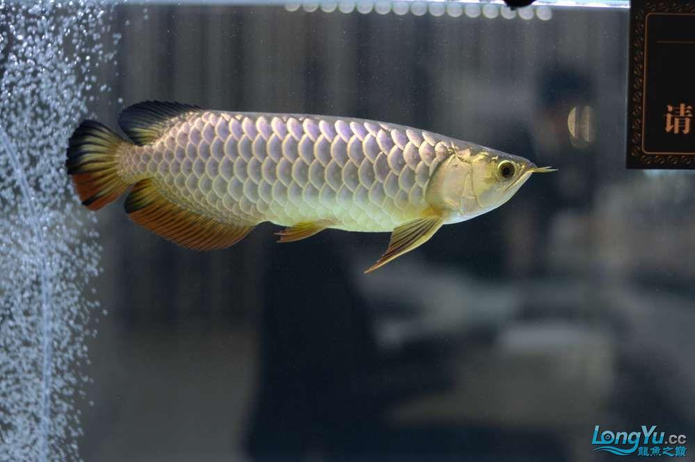 中国深圳国际水族文化节 西安龙鱼论坛 西安博特第78张