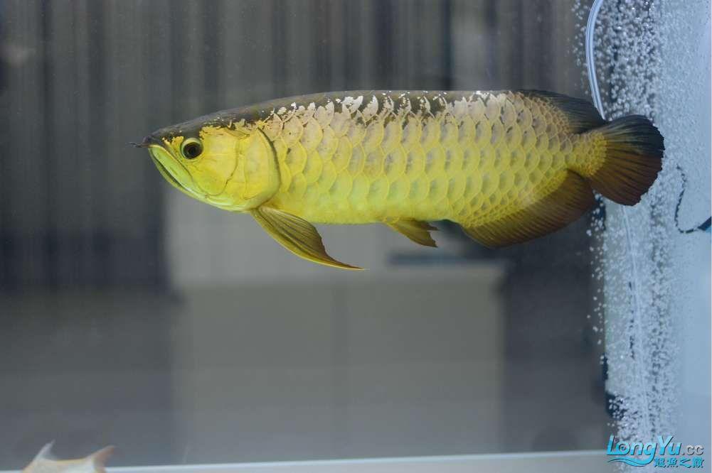 中国深圳国际水族文化节 西安龙鱼论坛 西安博特第79张