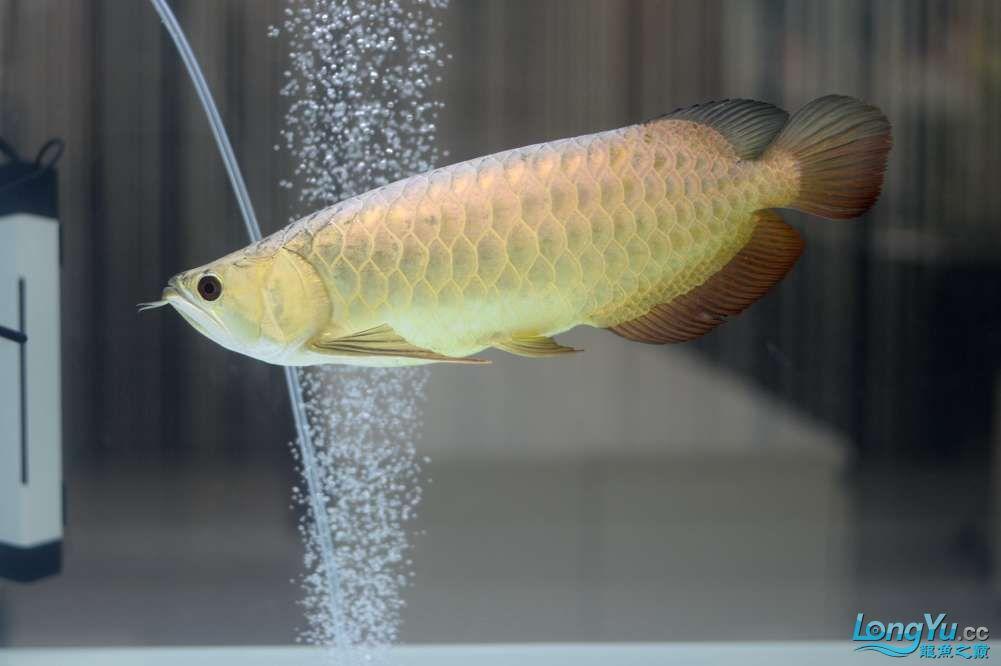 中国深圳国际水族文化节 西安龙鱼论坛 西安博特第85张