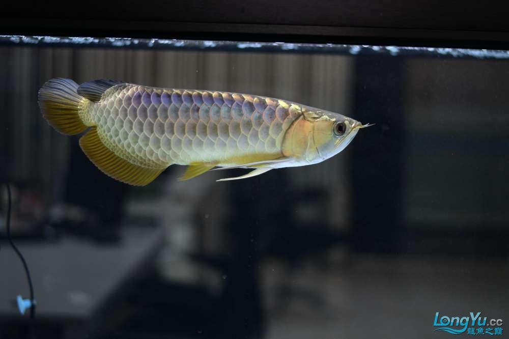 中国深圳国际水族文化节 西安龙鱼论坛 西安博特第87张