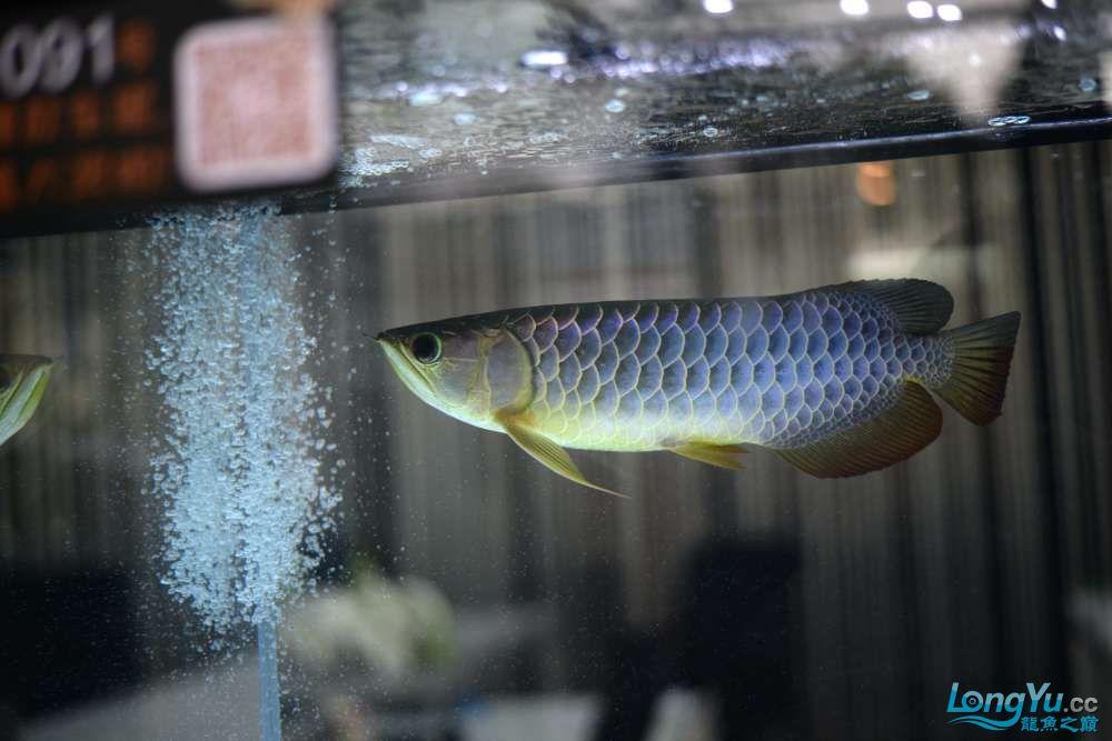 中国深圳国际水族文化节 西安龙鱼论坛 西安博特第90张