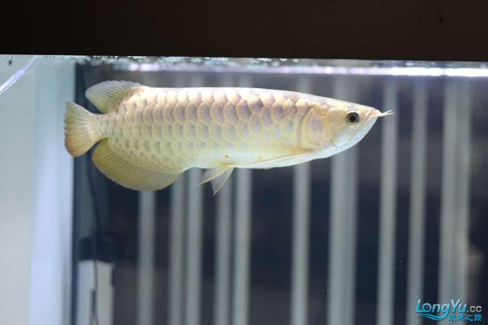 中国深圳国际水族文化节 西安龙鱼论坛 西安博特第94张