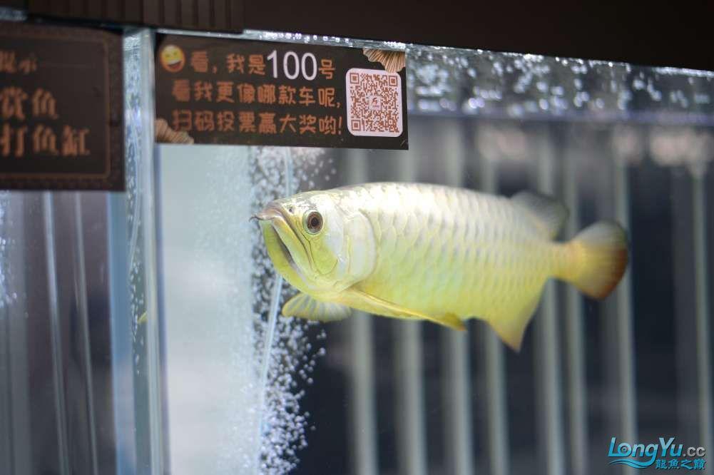 中国深圳国际水族文化节 西安龙鱼论坛 西安博特第96张
