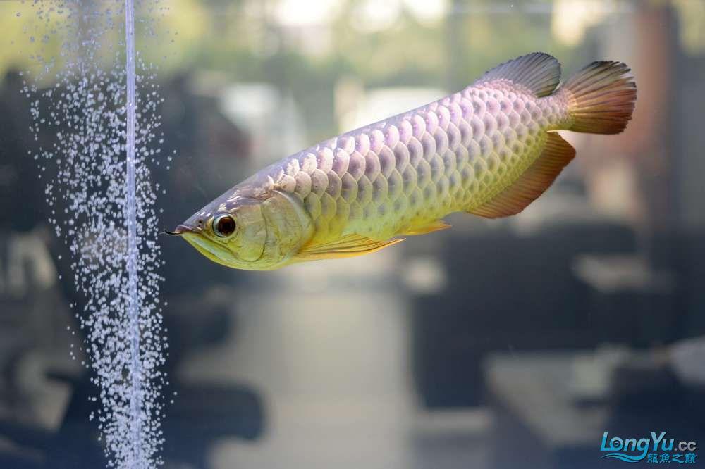 中国深圳国际水族文化节 西安龙鱼论坛 西安博特第97张