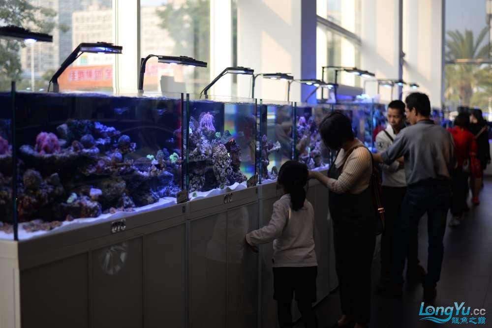 中国深圳国际水族文化节 西安龙鱼论坛 西安博特第101张