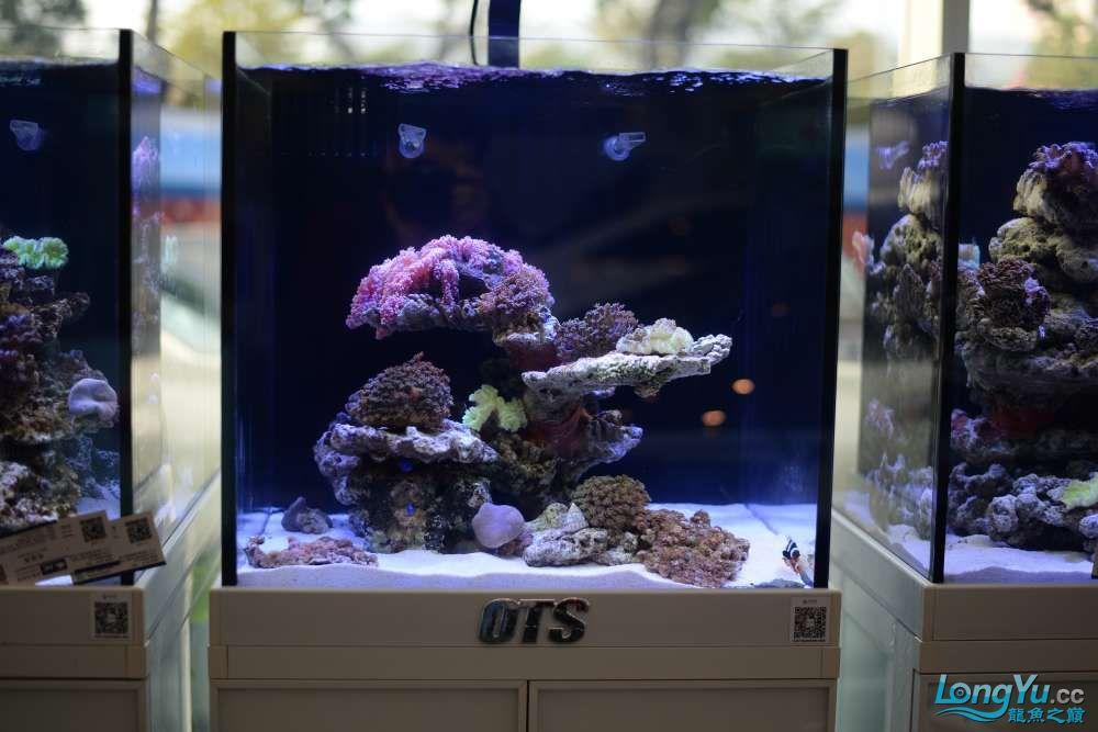 中国深圳国际水族文化节 西安龙鱼论坛 西安博特第104张
