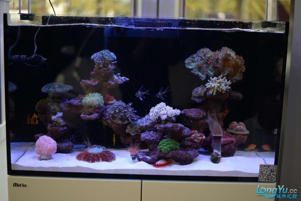 中国深圳国际水族文化节 西安龙鱼论坛 西安博特第115张