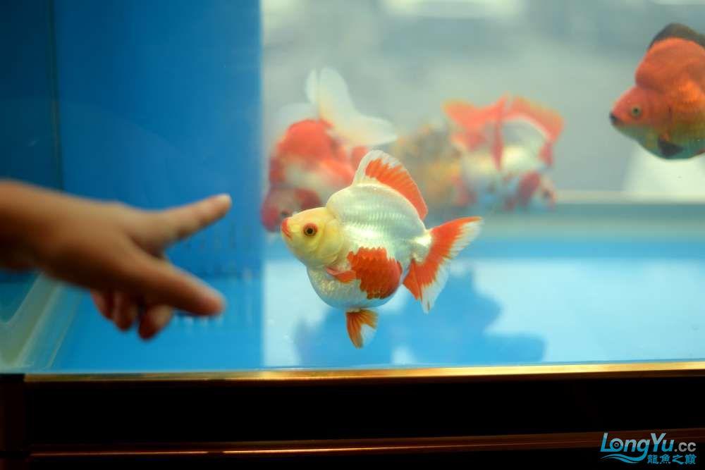 中国深圳国际水族文化节 西安龙鱼论坛 西安博特第116张