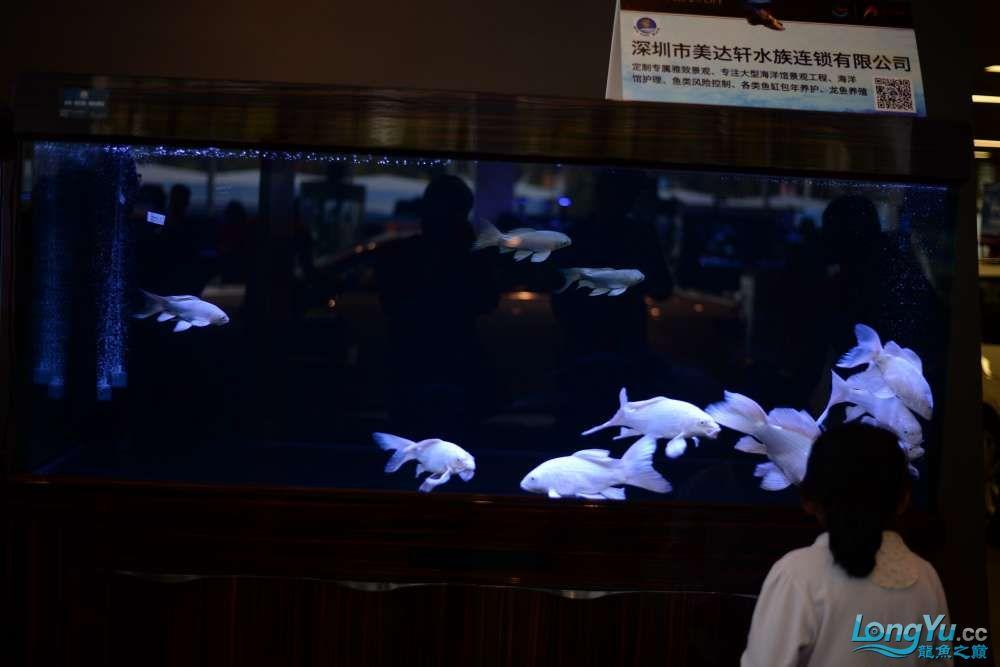 中国深圳国际水族文化节 西安龙鱼论坛 西安博特第117张