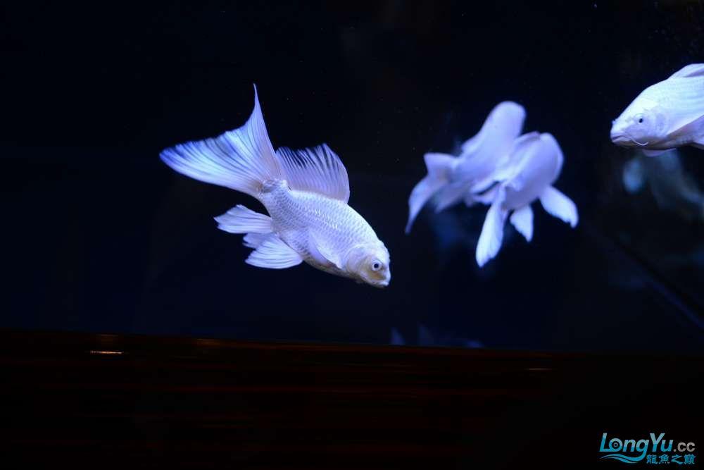中国深圳国际水族文化节 西安龙鱼论坛 西安博特第118张