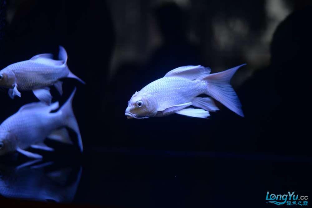 中国深圳国际水族文化节 西安龙鱼论坛 西安博特第119张