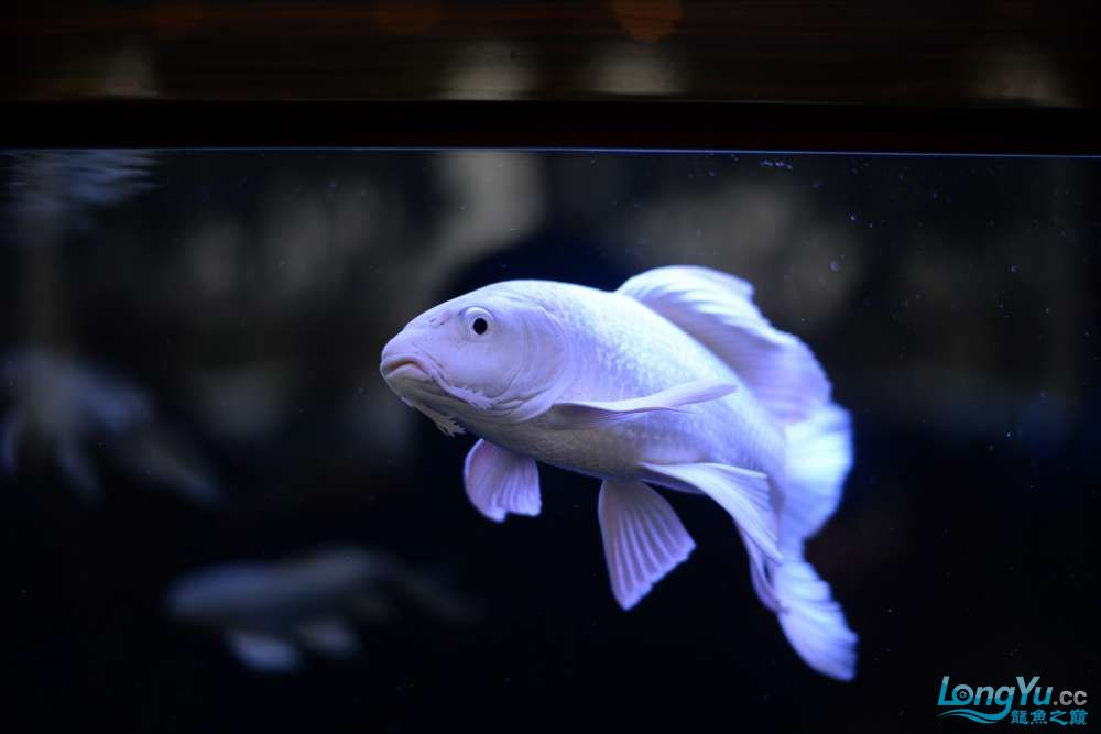 中国深圳国际水族文化节 西安龙鱼论坛 西安博特第120张