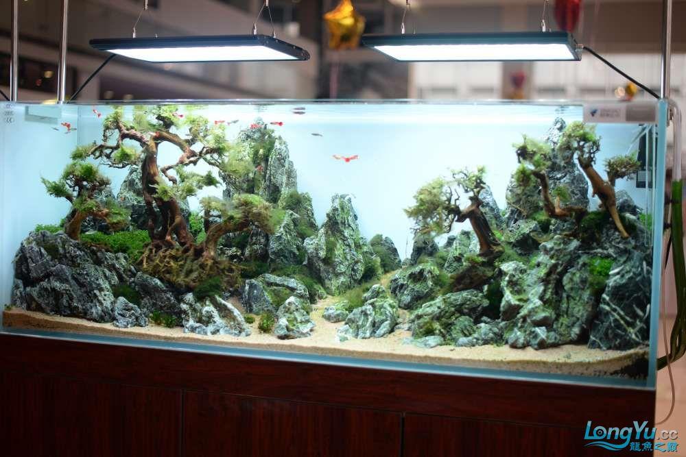 中国深圳国际水族文化节 西安龙鱼论坛 西安博特第122张