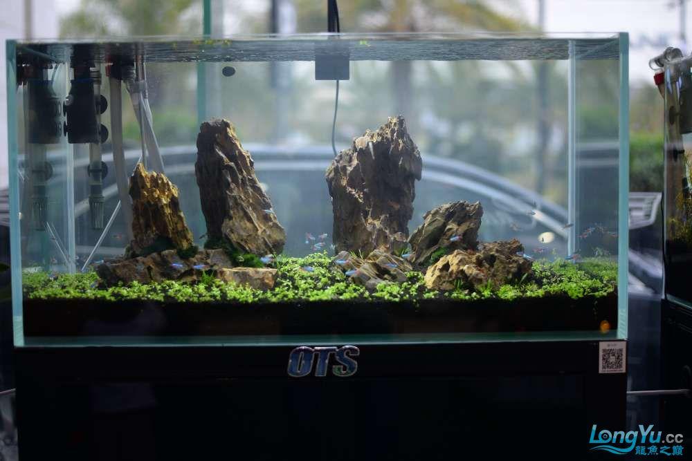中国深圳国际水族文化节 西安龙鱼论坛 西安博特第135张