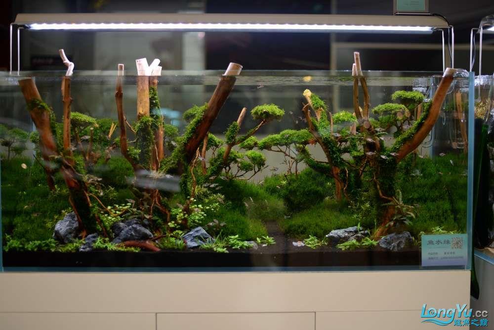 中国深圳国际水族文化节 西安龙鱼论坛 西安博特第140张