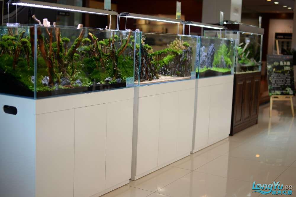 中国深圳国际水族文化节 西安龙鱼论坛 西安博特第141张