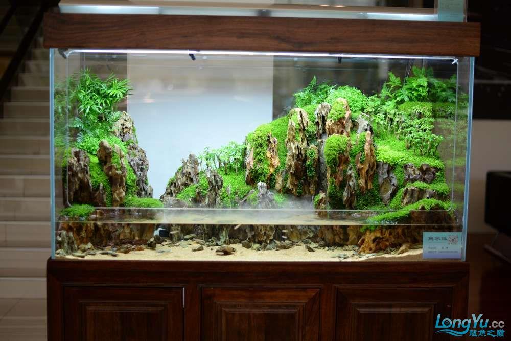 中国深圳国际水族文化节 西安龙鱼论坛 西安博特第142张