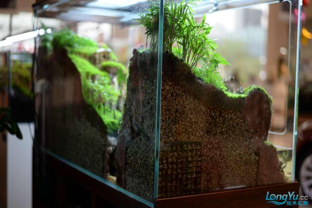 中国深圳国际水族文化节 西安龙鱼论坛 西安博特第144张
