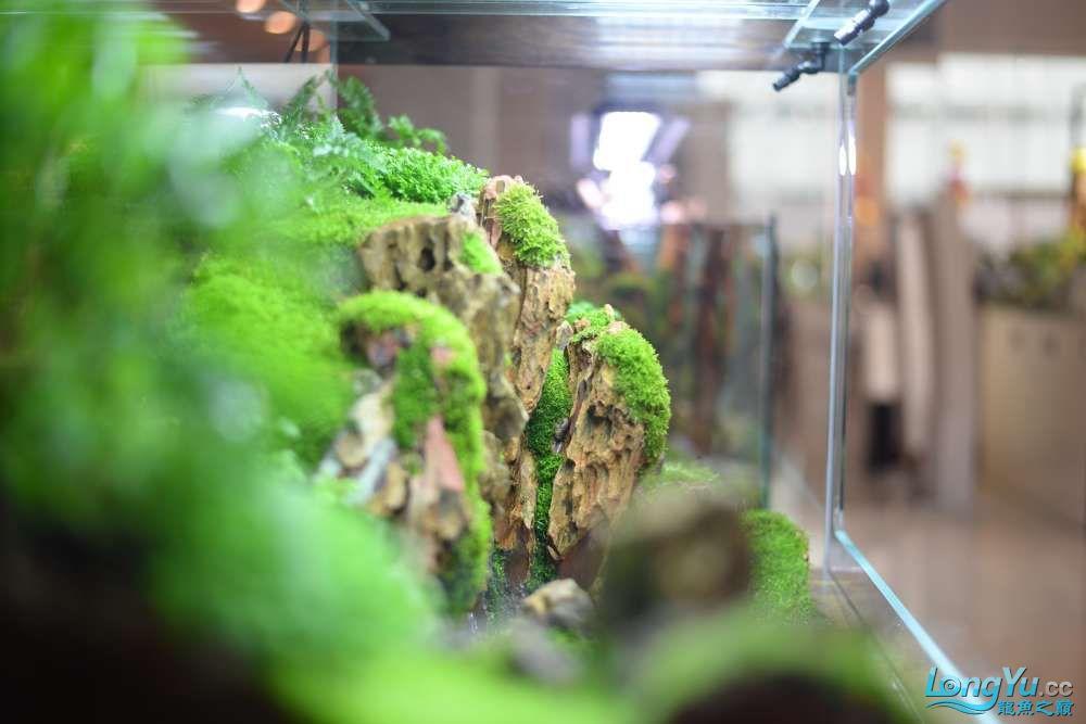 中国深圳国际水族文化节 西安龙鱼论坛 西安博特第145张