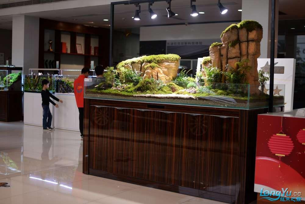 中国深圳国际水族文化节 西安龙鱼论坛 西安博特第153张