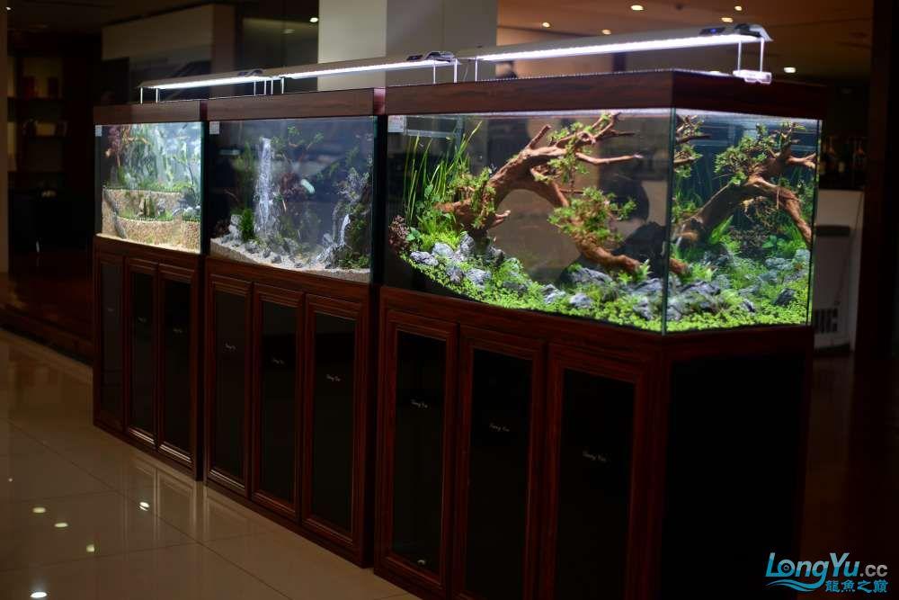中国深圳国际水族文化节 西安龙鱼论坛 西安博特第158张