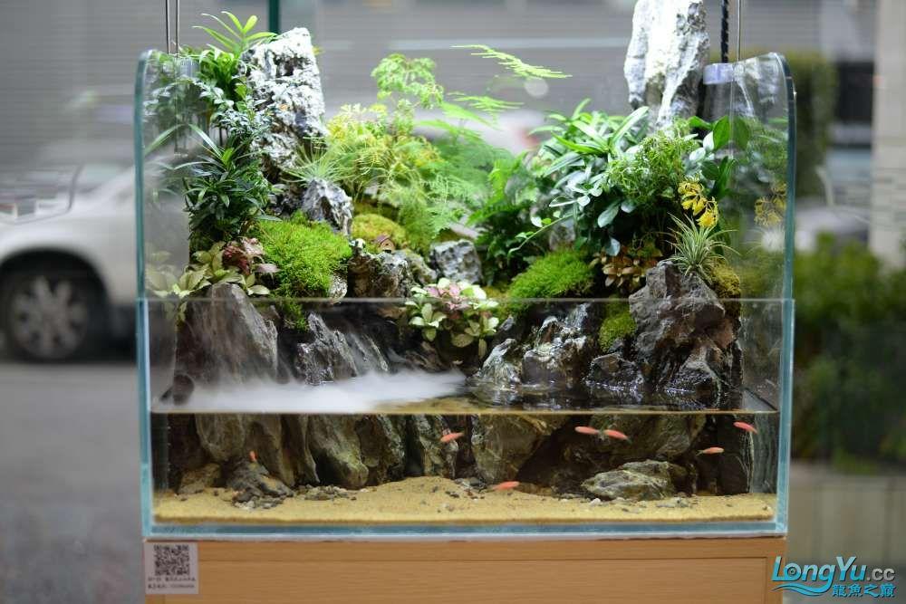 中国深圳国际水族文化节 西安龙鱼论坛 西安博特第160张